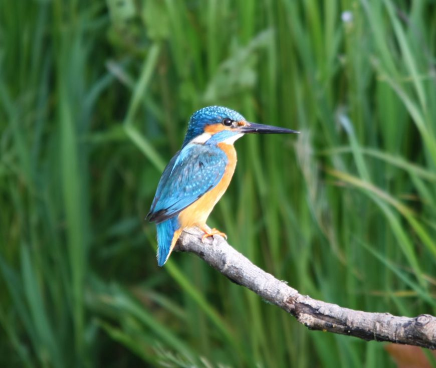 Kingfisher Riverside Camping & Caravan Park, South Molton
