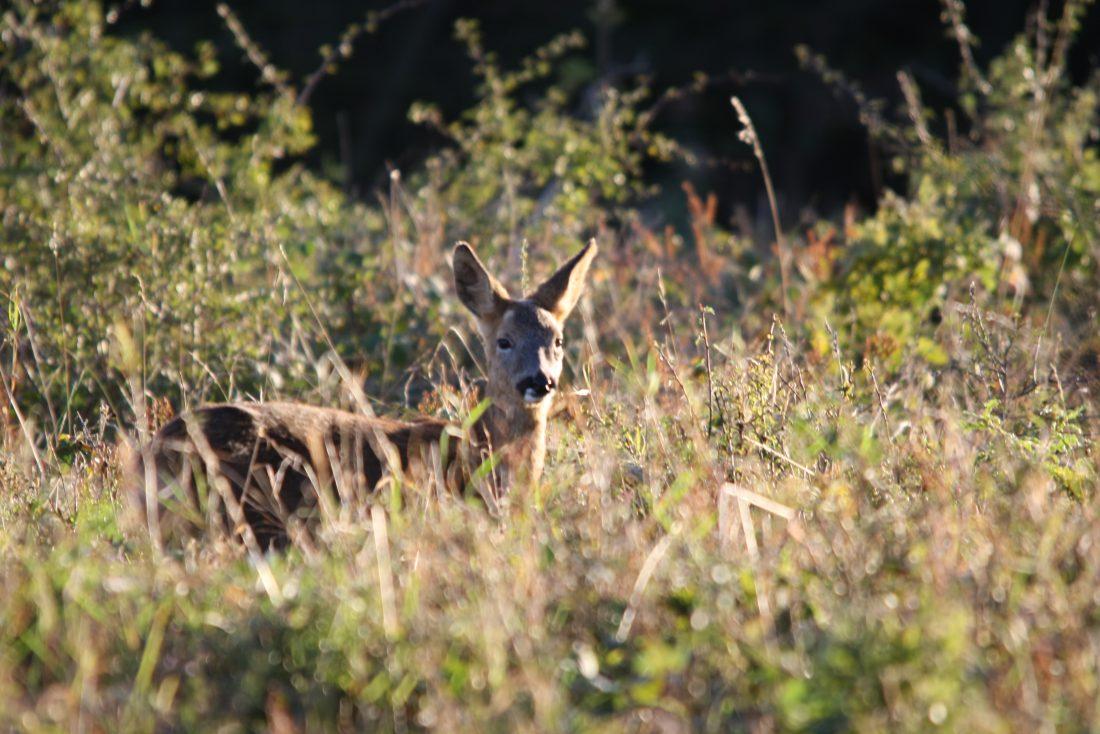 Deer Riverside Camping & Caravan Park, South Molton