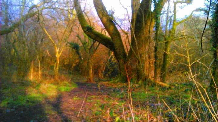 Woods at Riverside Camping Park, South Molton