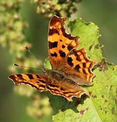 Wildlife Riverside Camping & Caravan Park, South Molton
