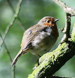 Bird Riverside Camping & Caravan Park, South Molton