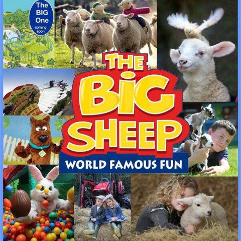 The Big Sheep, South Molton